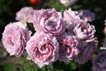 Un jardin qui éveille les sens avec les plantes à parfum Globe Planter