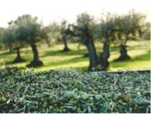 Découvrez les nouveaux Grands Crus de la récolte 2016 d'Oliviers&Co.