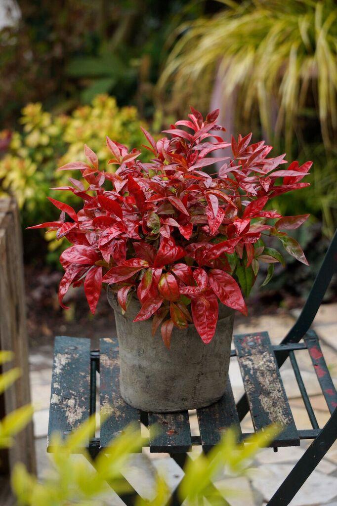 Globe Planter : Nuances de rouge pour mains vertes