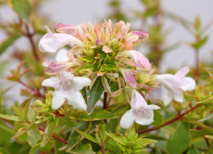 Végétaux à longue floraison Globe Planter - Pour profiter du jardin plus longtemps
