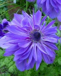 Planter un Jardin à Bulbe: le Guide Complet