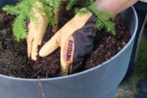 ROSTAING innove avec les gants de jardinage en cuir SEQUOIA
