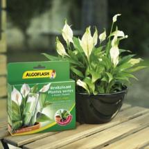 NOUVELLE DOSE REVITALISANTE PLANTES VERTES ET PLANTES FLEURIES ALGOFLASH