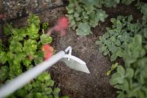 Cinq nouveaux outils de désherbage FISKARS