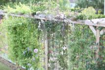 Globe Planter modernise les haies de jardin