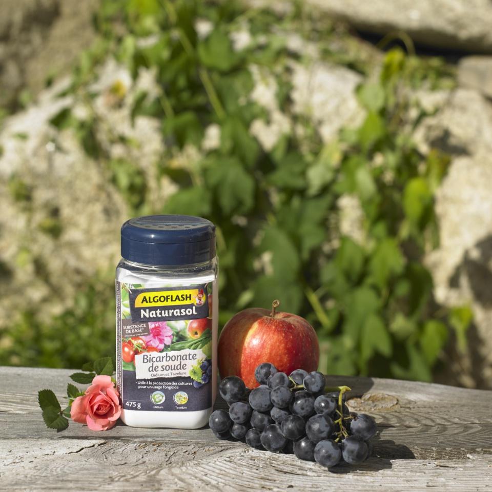 Nouveau : Bicarbonate de soude - Une méthode utile à la protection des cultures pour lutter contre l'oïdium et la tavelure