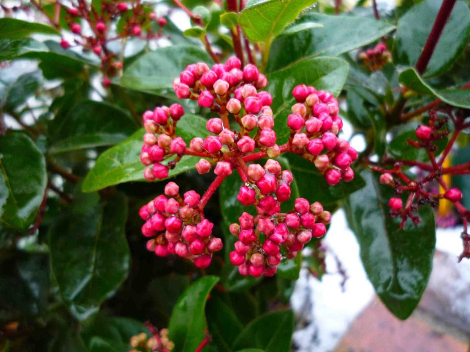 Arbustes qui attirent les oiseaux Globe Planter