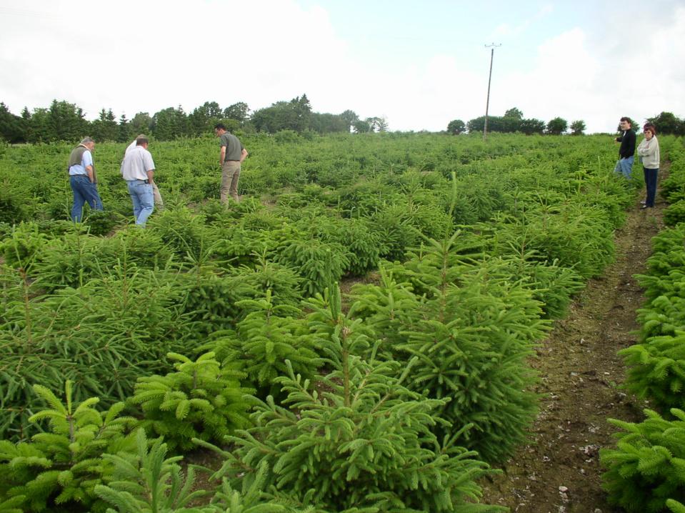 AFSNN/VAL'HOR - Marché du sapin de Noël - Retour en force pour les arbres cultivés en France - 5,7 millions de sapins naturels vendus en 2014