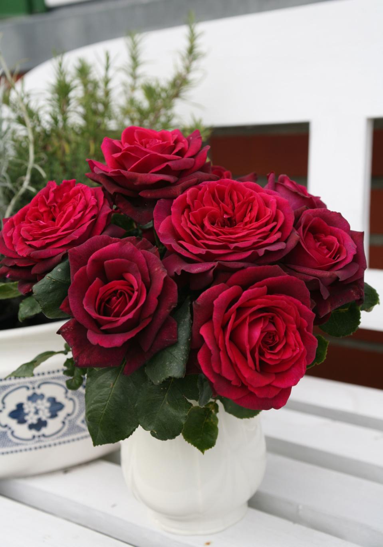 Collection PARFUMA® Globe Planter : des rosiers très résistants au parfum remarquable