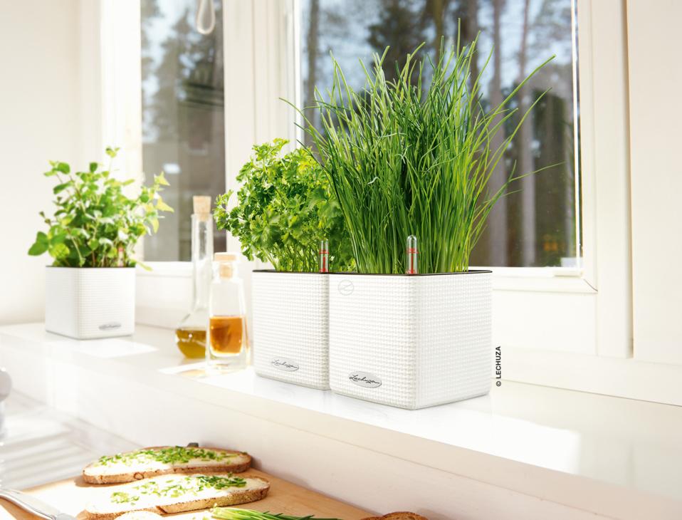 Pot à réserve d'eau cube color aromatiques My Little Jardin