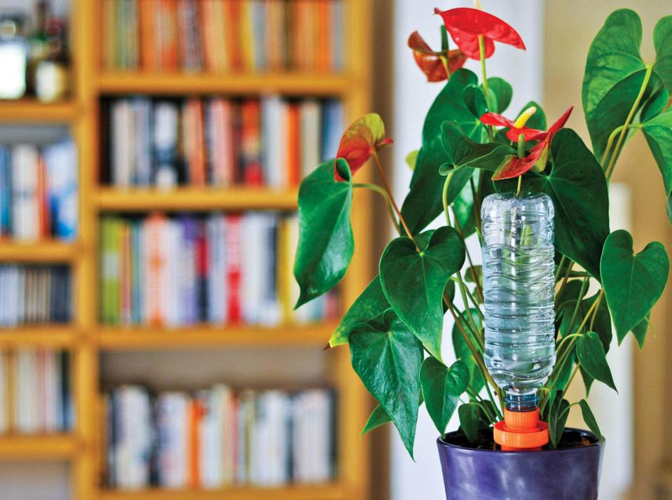 Plantes d'intérieur, fleurs, potagers ou jardinières, optez pour le système d'arrosage autonome AQUASOLO UNIVERSAL SYSTEM !