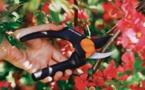Sécateurs, coupe-branches et cisaille à haies Fiskars - Des outils ergonomiques, légers et puissants, conçus pour réduire l'effort et la fatigue